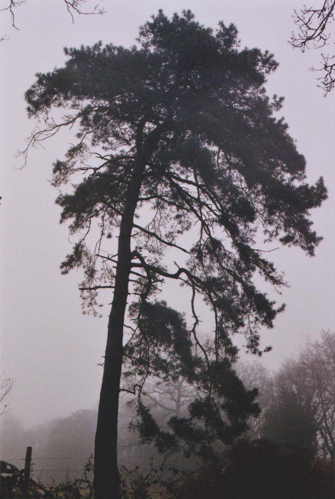 Photographie argentique, arbre dans la brume, campagne normande, décembre 2016, Normandie, France.
