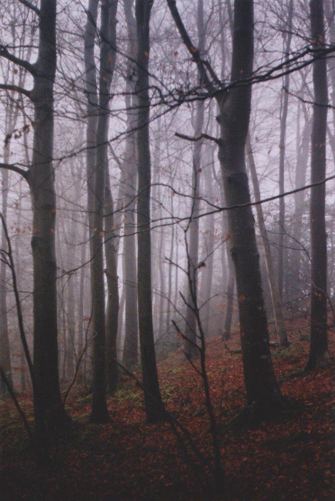 Photographie argentique, forêt dans la brume, décembre 2016, Normandie, France.