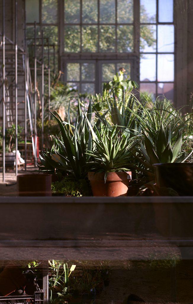 Photographie numérique, dans la serre, jardin des plantes, decembre 2018, Lille, France.