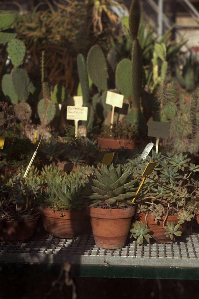 Photographie numérique, les plantes, jardin des plantes, décembre 2018, Lille, France.
