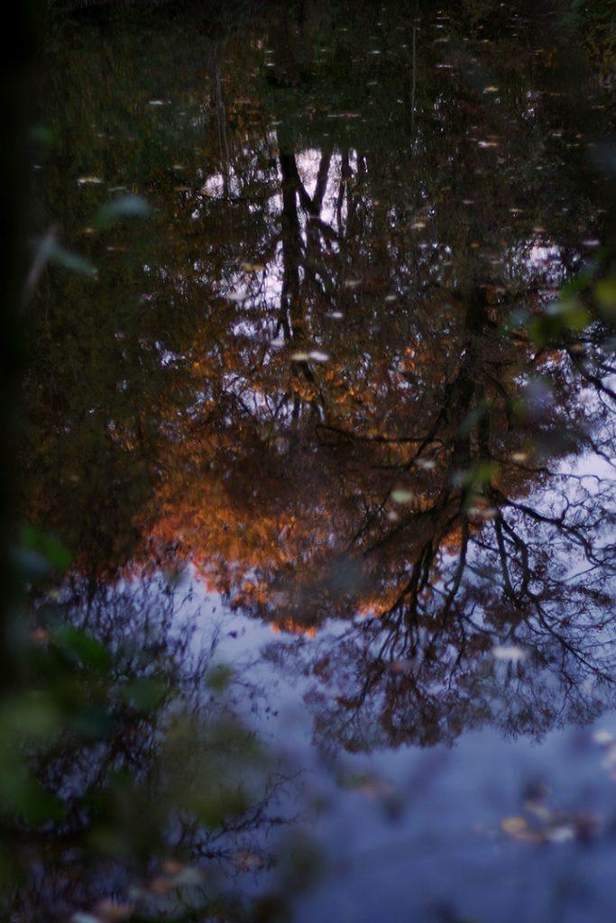 Photographie numérique, reflets d'automne, citadelle, novembre 2019, Lille, France.