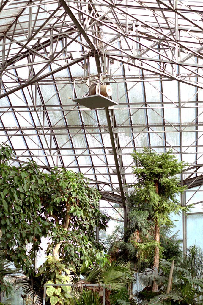 Photographie numérique, serre, jardin des plantes, decembre 2018, Lille, France.